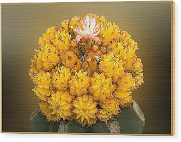 Wood Print featuring the photograph Yellow Cactus by Geraldine Alexander