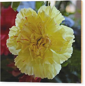 Yellow Carnation Delight Wood Print by Kurt Van Wagner