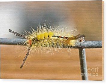 Yellow Caterpillar Wood Print