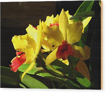 Yellow Cattleya Orchid Wood Print by Alfred Ng