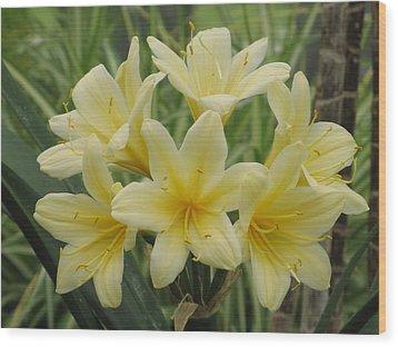 Yellow Clivia Lily Wood Print by Alfred Ng