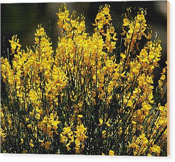 Wood Print featuring the photograph Yellow Cluster Flowers by Matt Harang