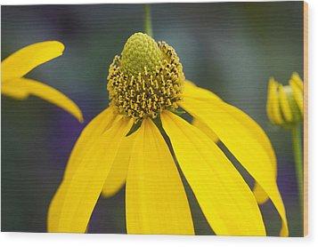 Yellow Coneflower Rudbeckia Wood Print by Rich Franco