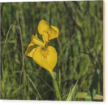 Wood Print featuring the photograph Yellow Crown by Leif Sohlman