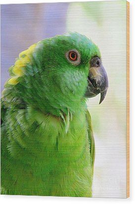 Yellow Crowned Amazon Parrot No 1 Wood Print by Mary Deal