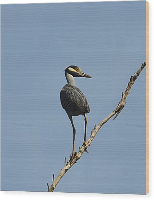 Wood Print featuring the photograph Yellow-crowned Night Heron by Dana Sohr