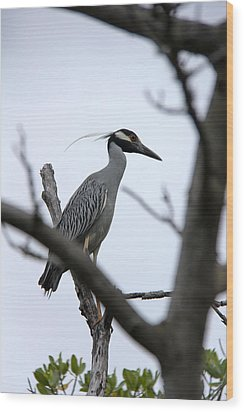 Yellow Crowned Night Heron Wood Print