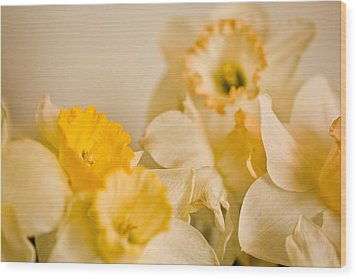 Yellow Daffodils Wood Print by John Holloway