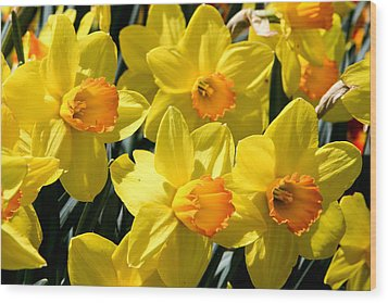 Yellow Daffodils Wood Print by Menachem Ganon