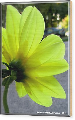 Yellow Dahlia Bloom Wood Print by Danielle  Parent