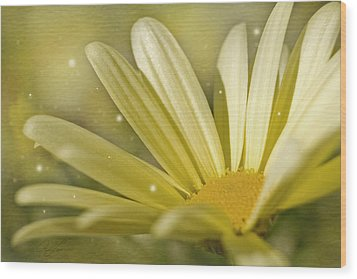 Wood Print featuring the photograph Yellow Daisy by Ann Lauwers