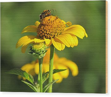 Yellow Daisy Wood Print by David T Wilkinson