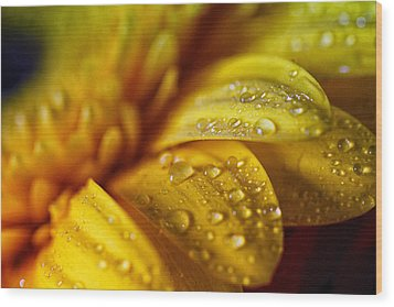 Yellow Daisy Drizzle Wood Print