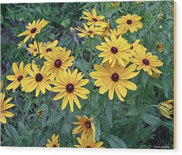 Yellow Daisy Flowers #3 Wood Print
