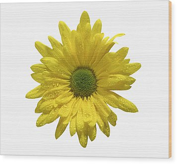 Yellow Daisy  Wood Print by Mauro Celotti