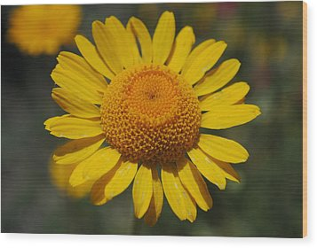 Wood Print featuring the photograph Yellow Daisy  by Robert  Moss