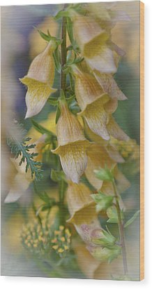 Yellow Digitalis Wood Print by Maj Seda