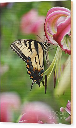 Yellow Eastern Swallowtail Butterfly Wood Print