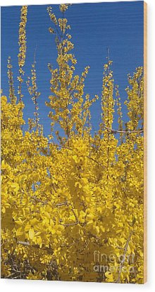 Yellow Explosion Wood Print by Melissa Petrey