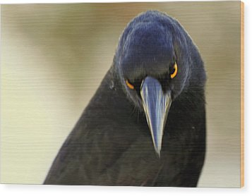 Wood Print featuring the photograph Yellow Eyes by Miroslava Jurcik