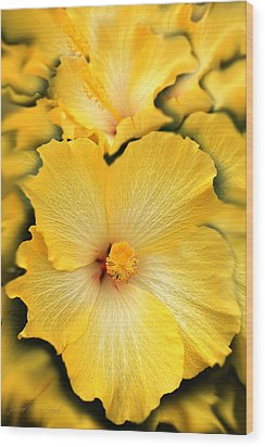 Yellow Fantasy Hibiscus Flowers Wood Print by Jennie Marie Schell