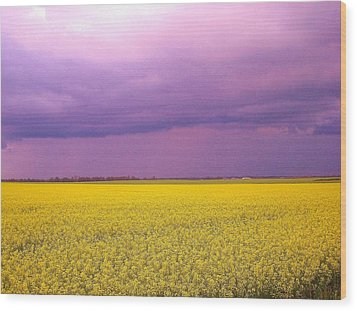 Yellow Field Purple Sky Wood Print by Cathy Long