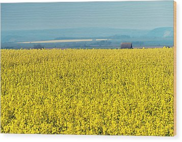 Yellow Field Wood Print by Svetlana Sewell