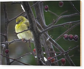 Yellow Finch Wood Print