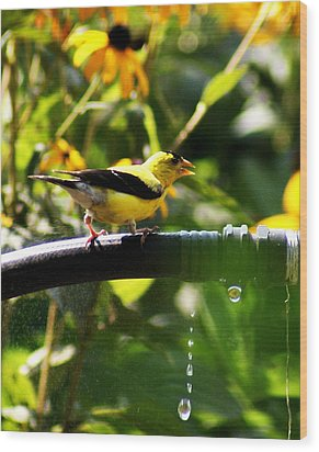 Wood Print featuring the photograph Yellow Finch With A Water Leak by B Wayne Mullins