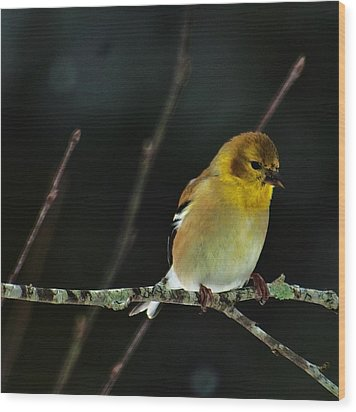 Wood Print featuring the photograph Yellow Finery by John Harding