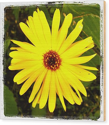 Yellow Flower 12 Wood Print