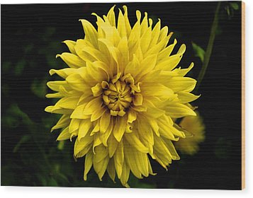 Wood Print featuring the photograph Yellow Flower by Matt Harang