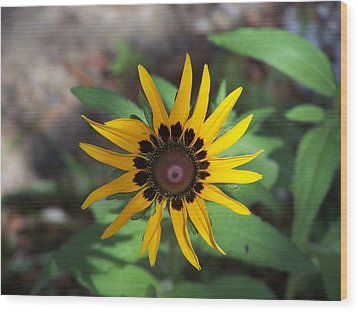 Wood Print featuring the photograph Yellow Flower by Michele Kaiser