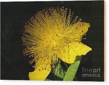 Yellow Flower Wood Print by Nur Roy