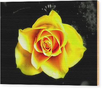 Yellow Flower On A Dark Background Wood Print