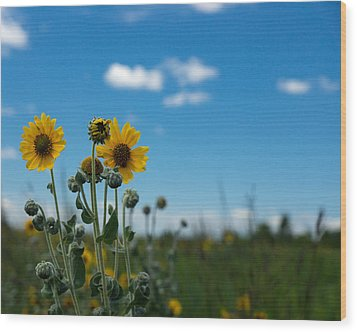 Yellow Flower On Blue Sky Wood Print