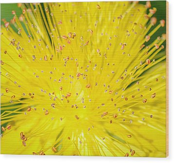 Wood Print featuring the photograph Yellow Flower  by Trace Kittrell