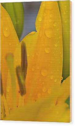 Yellow Flower With Water Drops Wood Print
