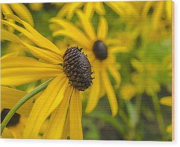 Yellow Flowers Wood Print by Adam Budziarek