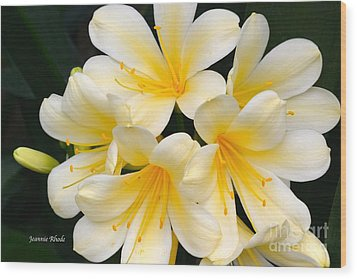 Wood Print featuring the photograph Clivia Yellow Flowers by Jeannie Rhode
