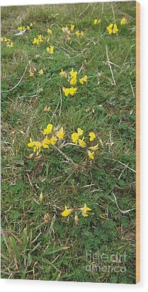 Yellow Flowers Wood Print by John Williams