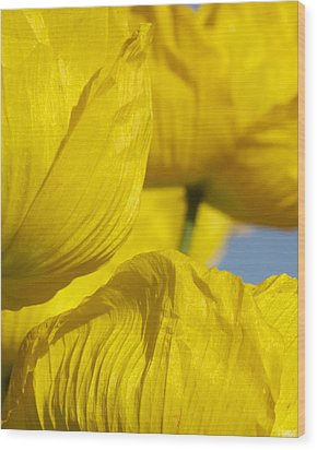 Yellow Flowers Wood Print by Stuart Hicks