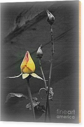 Yellow Focus Wood Print by Carol  Hynes