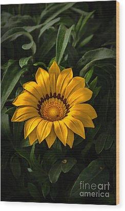 Yellow Gazania Wood Print by Robert Bales