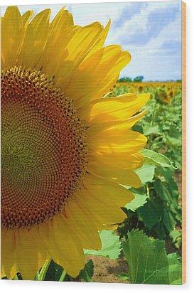 Yellow Glory #2 Wood Print by Robert ONeil
