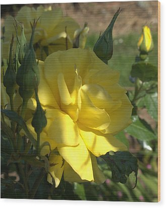 Wood Print featuring the photograph Yellow Grace by Suzy Piatt