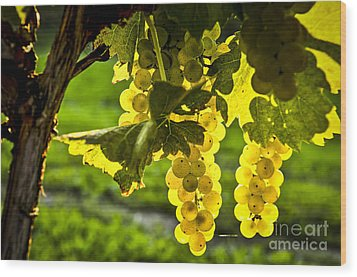 Yellow Grapes In Sunshine Wood Print by Elena Elisseeva