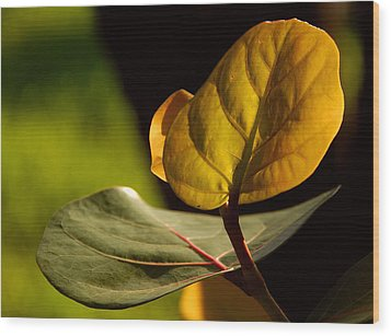 Wood Print featuring the photograph Yellow-green by Lorenzo Cassina