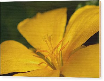 Wood Print featuring the photograph Yellow by Greg Allore