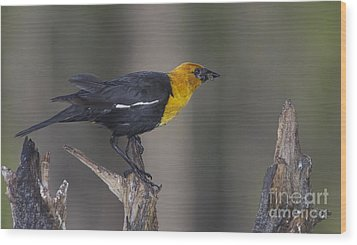 Yellow Headed Bird Wood Print
